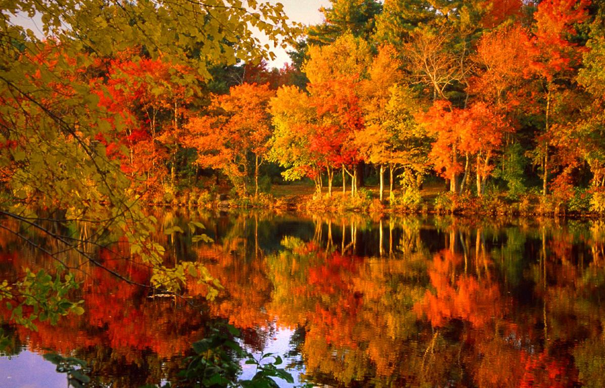 fall-foliage-97773-high-quality-and