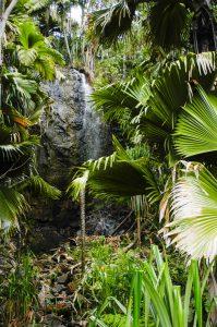 vallee-de-mai-waterfall-seychelles-flora-fauna-6